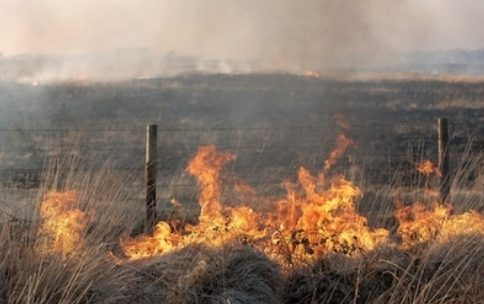 Stop burning the north with disposable BBQs you fat wankers